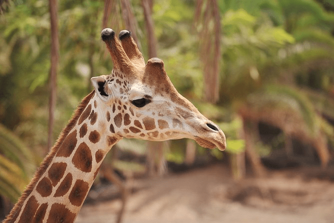 Visit the well loved Oasis wildlife park on Fuengirola